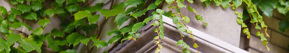 Vines growing on a pillar
