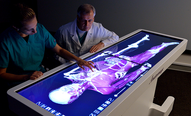 D'Youville Receives Grant for Innovative Virtual Dissection Table