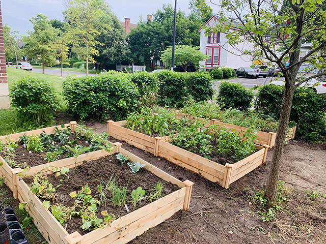 Three of the four beds at the community garden.