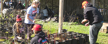 Students helping plant seedlings.